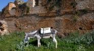 Maj-2012-Wyprawa-do-Tunezji-030