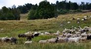 Sierpien-2012-Wyprawa-do-Rumuni-003